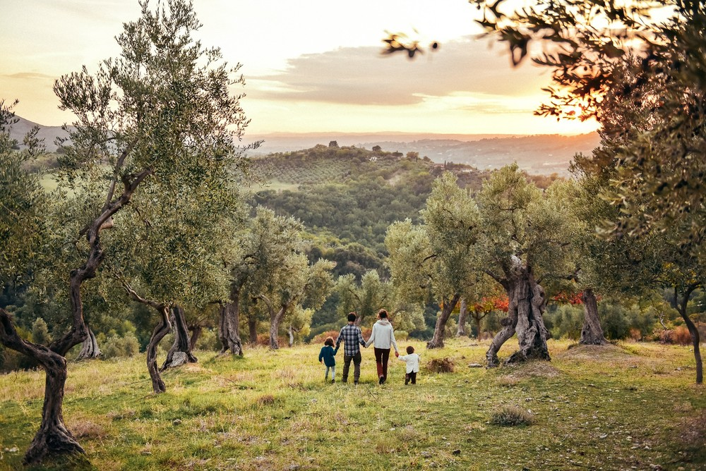 Оливковое счастье