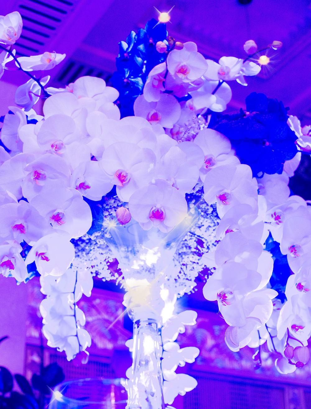 Юбилей из орхидей