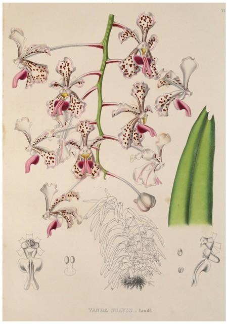 Портреты орхидей, март 2018