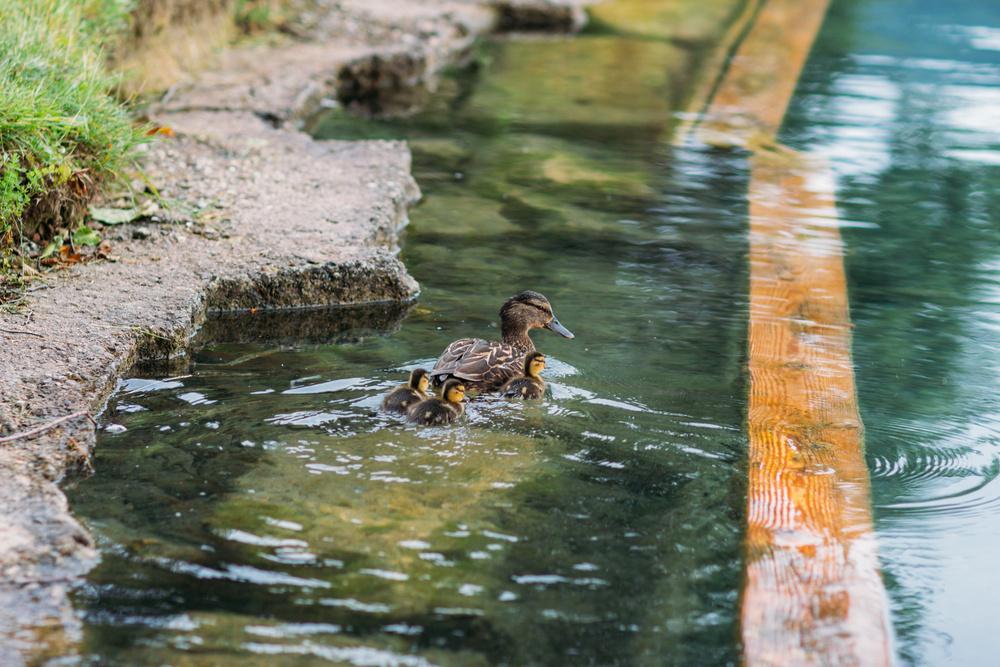 Slovenia, lake Bled | Natasha & Andrey