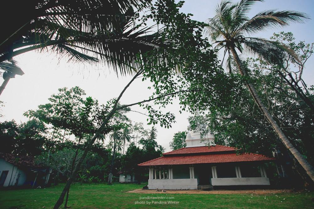 Шри Ланка, Коггала