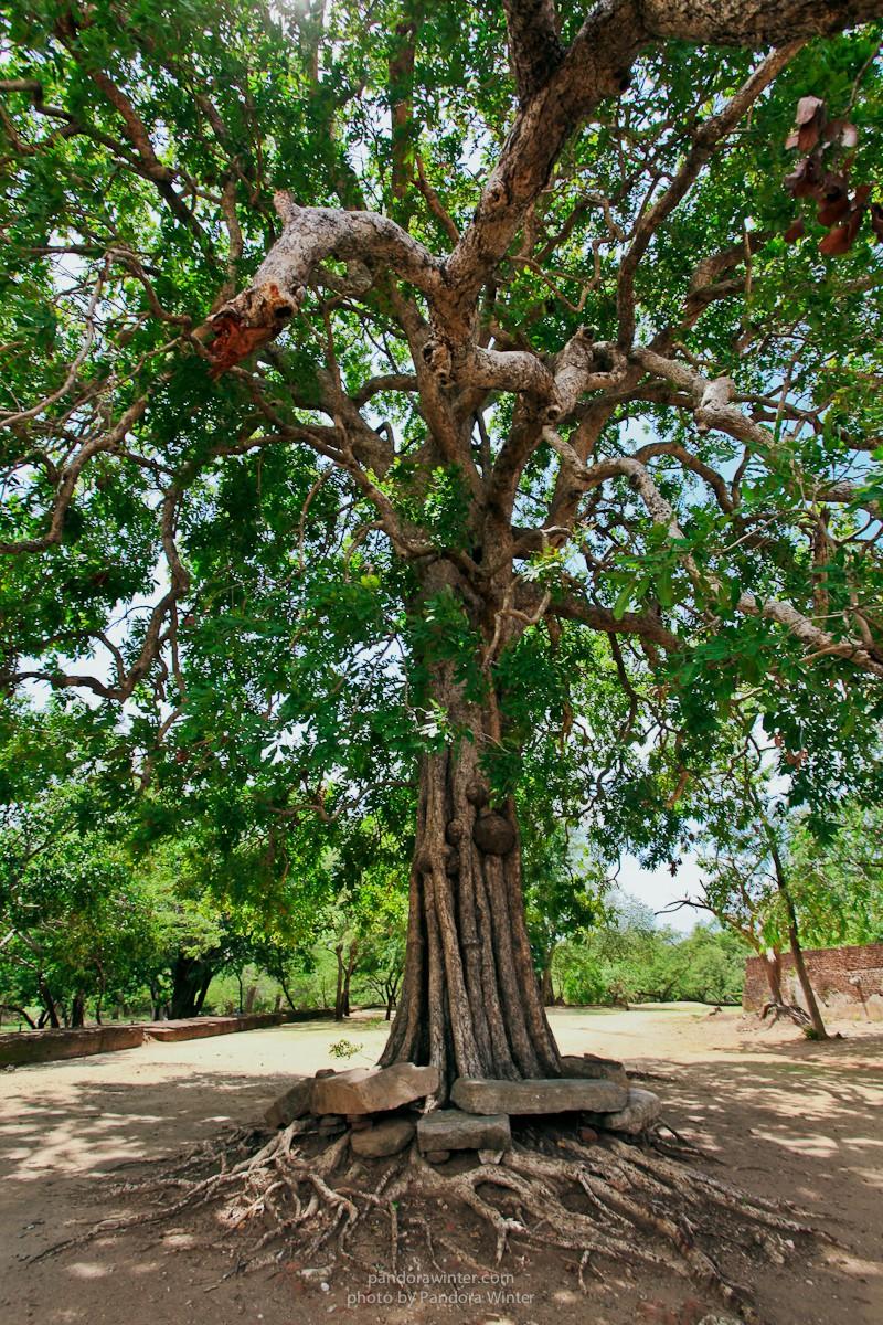 Шри Ланка, Полоннарува