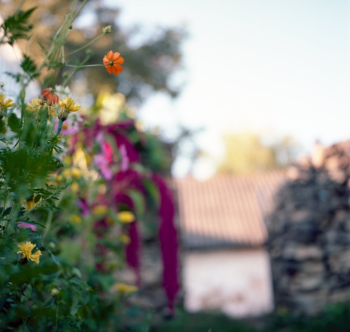 Лютики-цветочки