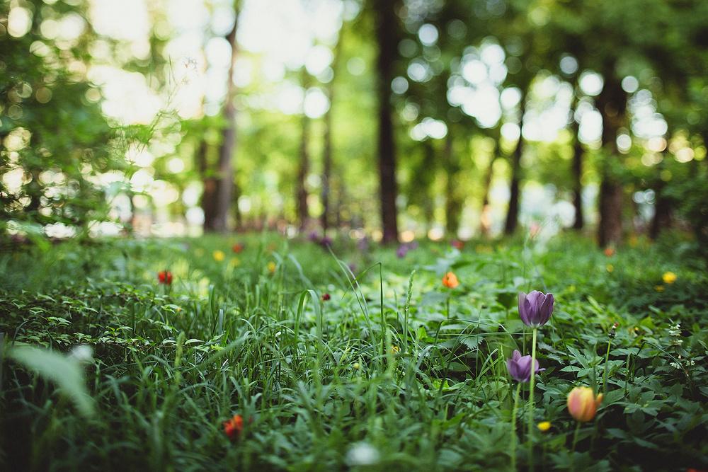 Солнечный день в Ботаническом