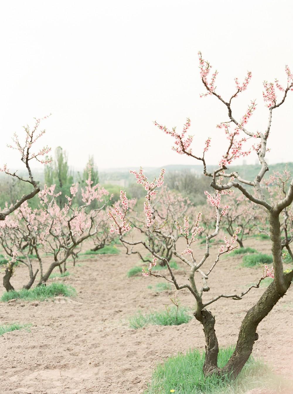 Spring blossom. Anna
