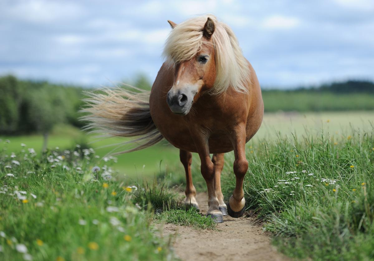 Свободные лошади