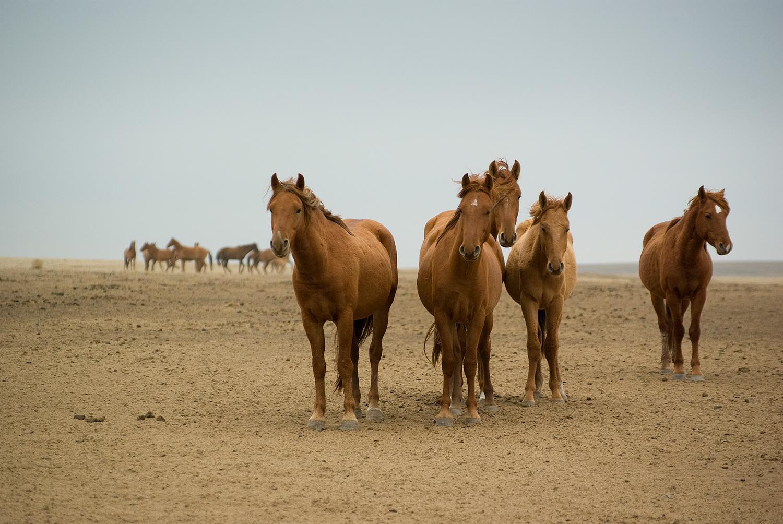 Дикие лошади, Ростовский заповедник