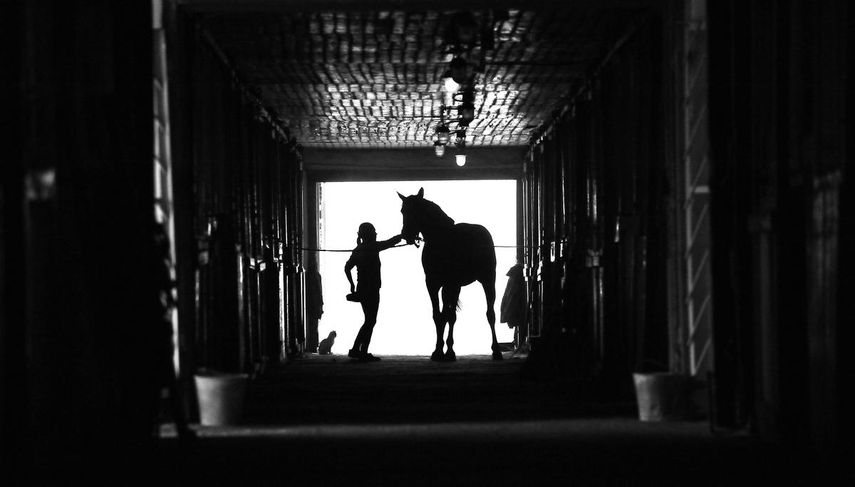 Люди и лошади