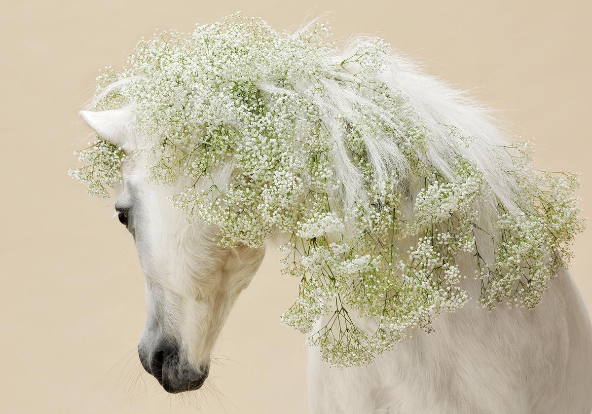 Imagination / Лошади и цветы
