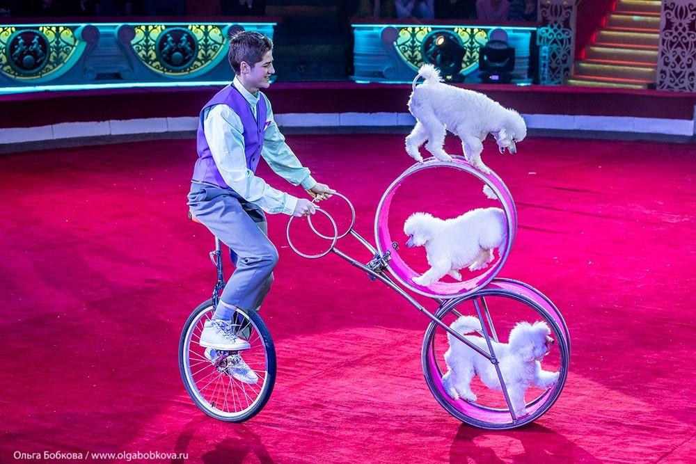 Цирк. Шоу