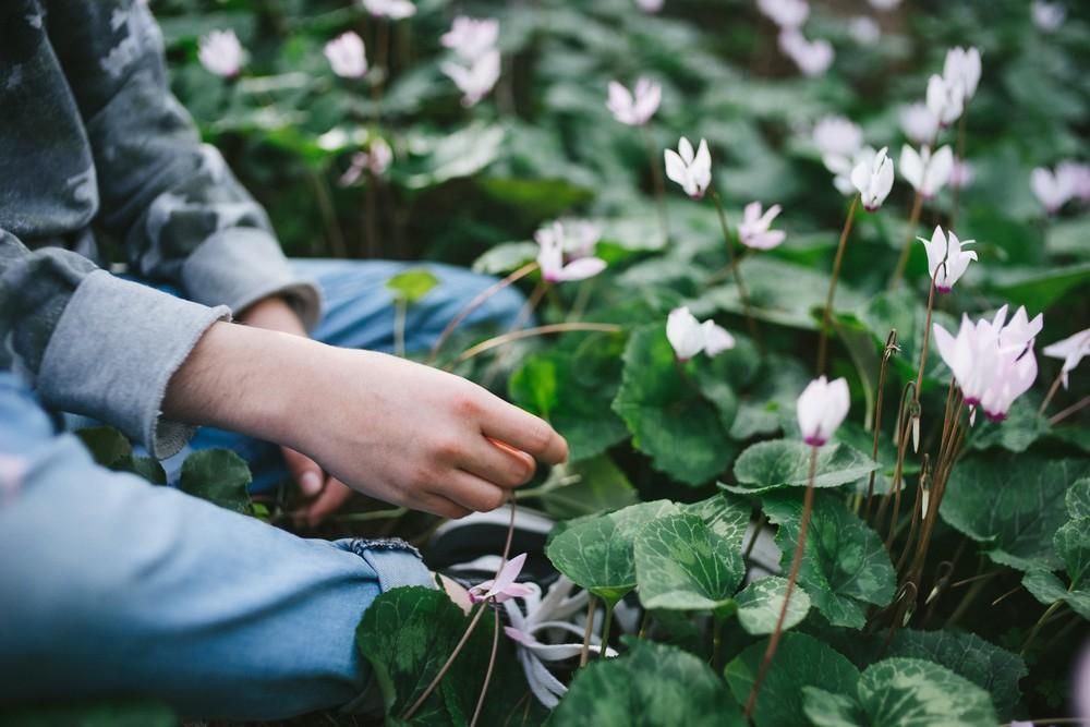 Flower carpet for Michal
