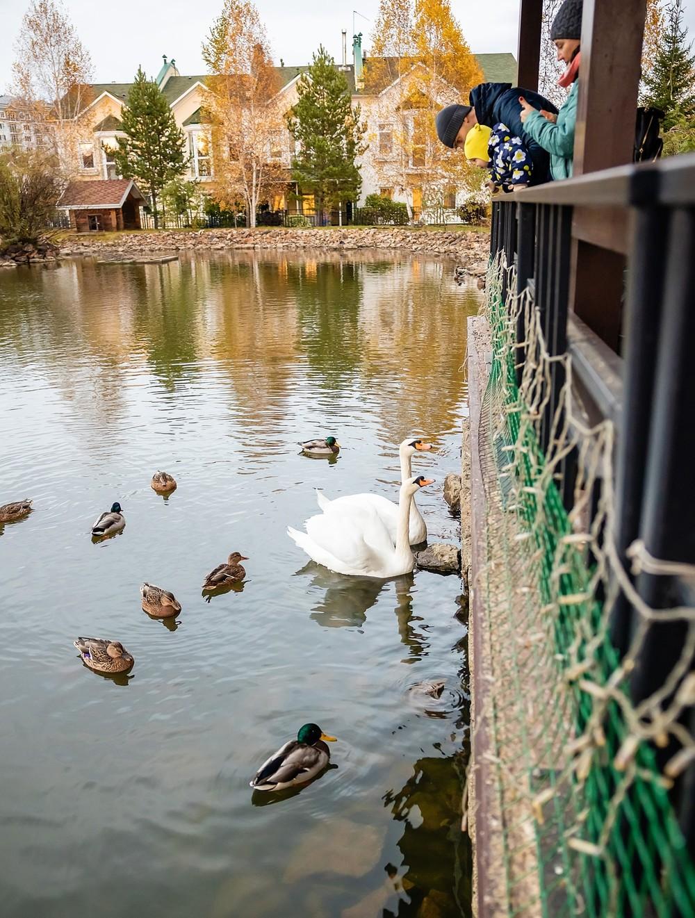 Mon Plaisir кафе ресторан Красноярск пруд лебеди банкет удачный лебеди пруд