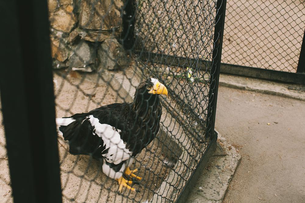 Mitten im Umzug und Zoo-Ausflug
