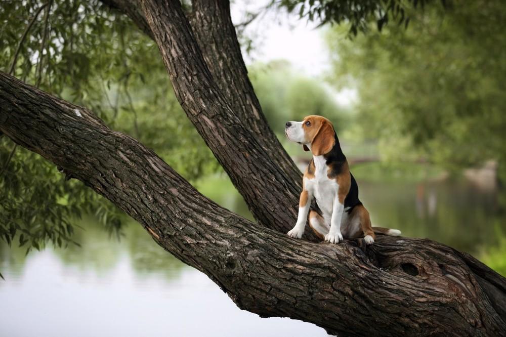 Фотосъемка животных на природе