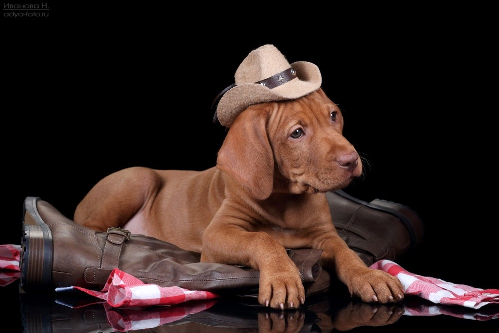 Домашняя фотосъемка щенков