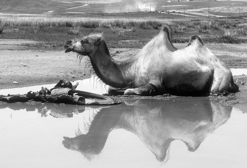 Mongolia: Black and White