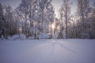 Хрустальный лес