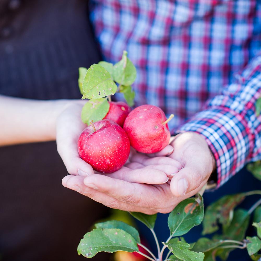 деревья-цветы-плоды-новые деревья