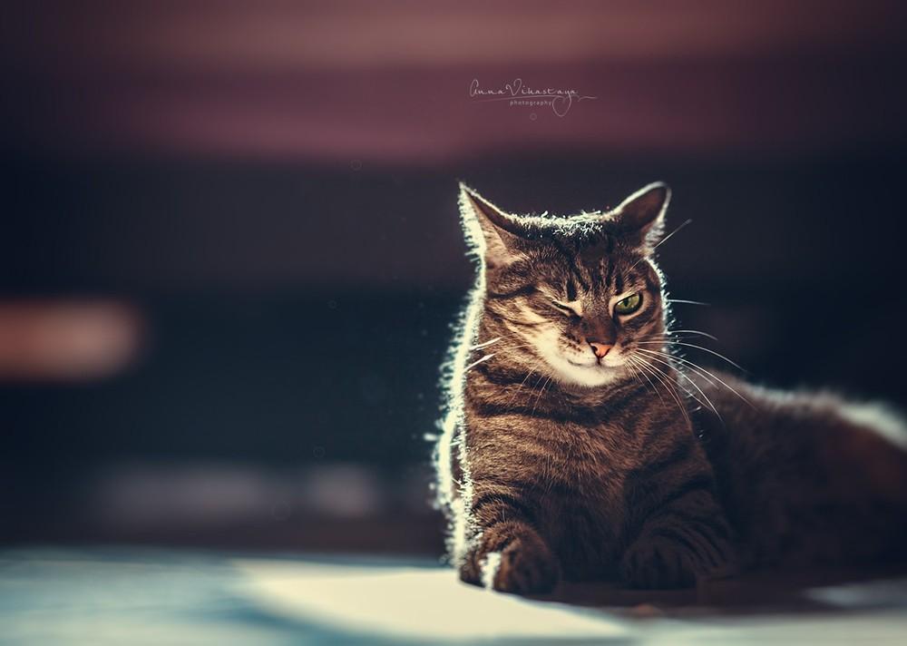 Информация о фотографе - сайт фотографа Анна Вихастая