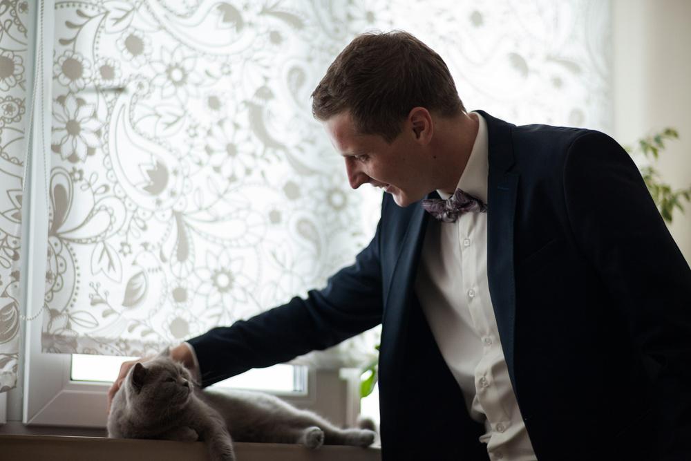 жених с котом