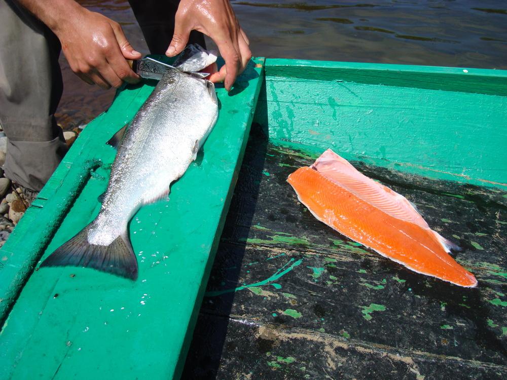 Открытие сезона на ловле красной рыбы (Сима)