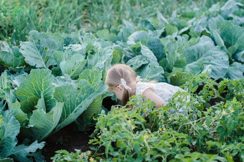 Огородное лето