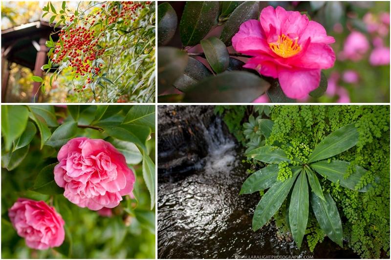 Sydney Camellia Gardens