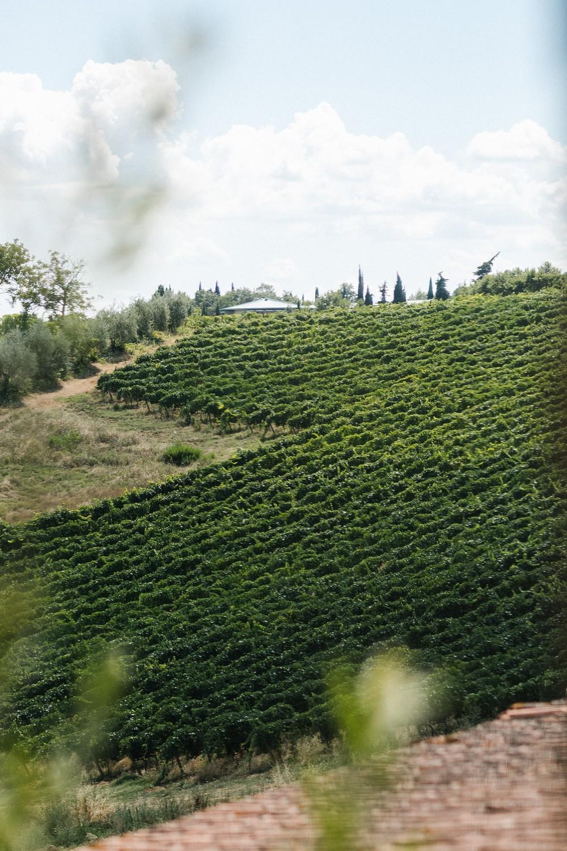 ITALY, TOSCANY